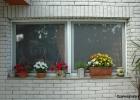 rugos-szunyoghalo-dupla-ablak.jpg
