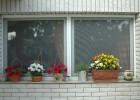 Rugós szúnyogháló ablakra